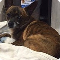 Adopt A Pet :: Precious - Gainesville, FL