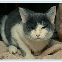 Adopt A Pet :: Frances - Island Heights, NJ