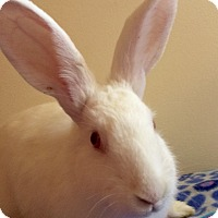 New Zealand Mix for adoption in Huntsville, Alabama - Sugarpie
