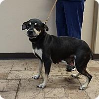 Adopt A Pet :: Babs - Oviedo, FL