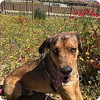 Adopt A Pet :: Moody- Mad Eye Moody - Temecula, CA