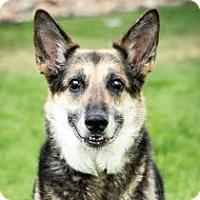 Adopt A Pet :: Referral - Sadie - Denver, CO