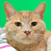Adopt A Pet :: Doug - Redmond, OR