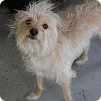 Adopt A Pet :: Alley - Phoenix, AZ