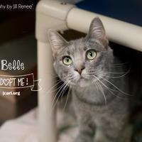 Adopt A Pet :: Belle - Newton, IA