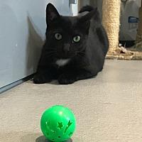 Adopt A Pet :: Spring - Lafayette, NJ