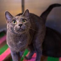 Adopt A Pet :: Bandit - Birdsboro, PA
