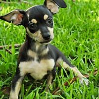 Adopt A Pet :: Matthew - San Antonio, TX