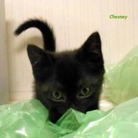 Adopt A Pet :: Chesney - Oskaloosa, IA