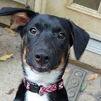 Adopt A Pet :: Jenny - Great Falls, VA