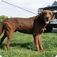 Adopt A Pet :: Marti - Lewisville, IN