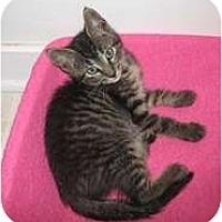 Adopt A Pet :: Romeo - Shelton, WA