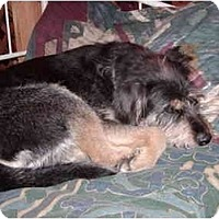 Adopt A Pet :: TYLER - Florissant, CO