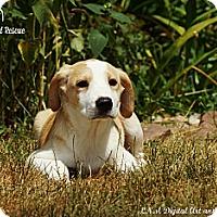 Adopt A Pet :: Vivian - Southington, CT