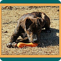 Adopt A Pet :: Tito - Hagerstown, MD