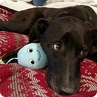 Adopt A Pet :: Jade - Marietta, GA