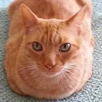 Adopt A Pet :: Sammy - Morgan Hill, CA
