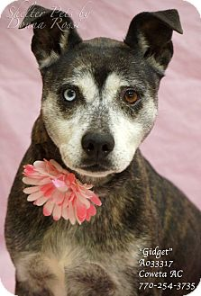 Husky Mix Dog for adoption in Newnan City, Georgia - Gidget