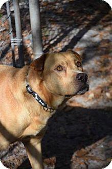 Mixed Breed (Large) Mix Dog for adoption in Bradenton, Florida - Teddy