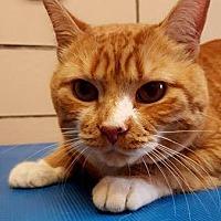 Adopt A Pet :: Tasha and Thumper* - Trexlertown, PA