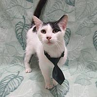 Adopt A Pet :: DALTON - Lexington, NC