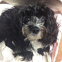 Adopt A Pet :: Nola - Oak Ridge, NJ