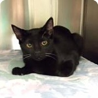 Adopt A Pet :: Zero (Petsmart FH) - Trenton, NJ