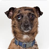 Adopt A Pet :: Mario - San Luis Obispo, CA