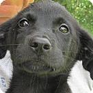 Adopt A Pet :: Sully