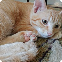 Adopt A Pet :: Mercury - Columbus, OH