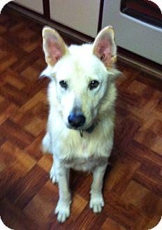 Shepherd (Unknown Type)/Shepherd (Unknown Type) Mix Dog for adoption in Baton Rouge, Louisiana - Charlie