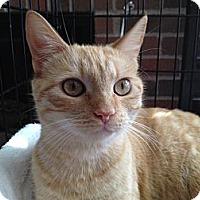 Adopt A Pet :: Juliette - Tomball, TX
