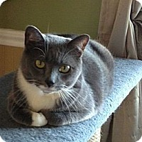 Adopt A Pet :: Starkey - Port Republic, MD