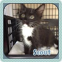 Adopt A Pet :: Scout - Bradenton, FL