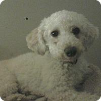 Adopt A Pet :: Sugar - Carey, OH
