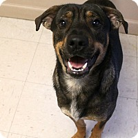 Shepherd (Unknown Type) Mix Dog for adoption in Trenton, New Jersey - Joseph