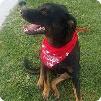 Adopt A Pet :: Nancy - Burbank, CA