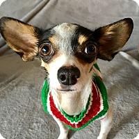 Adopt A Pet :: Cappi - San Pedro, CA