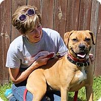 Adopt A Pet :: Fiona - Elyria, OH