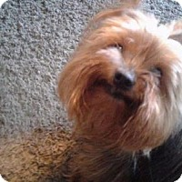 Adopt A Pet :: Babe - Richmond, IN