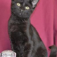 Adopt A Pet :: Hades - Larned, KS