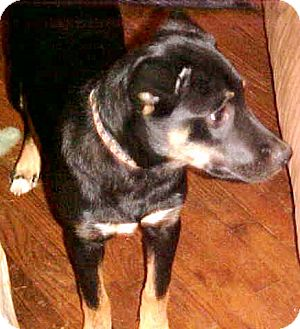 Border Terrier/Harrier Mix Dog for adoption in Anderson, South Carolina - Mary Belle
