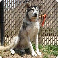 Adopt A Pet :: *AARON - Norco, CA