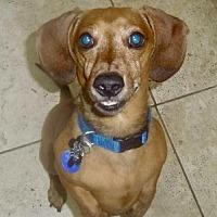 Adopt A Pet :: Thurston - Orangeburg, SC