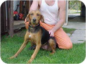 Hound (Unknown Type) Mix Dog for adoption in Gladwin, Michigan - Hound