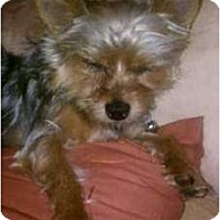 Adopt A Pet :: Brady - Charlotte, NC