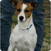 Adopt A Pet :: Speedy - Westbrook, CT