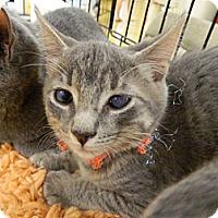 Adopt A Pet :: Trish - The Colony, TX