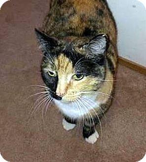 Calico Cat for adoption in HILLSBORO, Oregon - Freckles  **Community Service Posting**