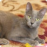 Adopt A Pet :: Majken - Chicago, IL